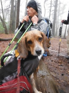 My hiking partner Scout during his first rainy day on the AT