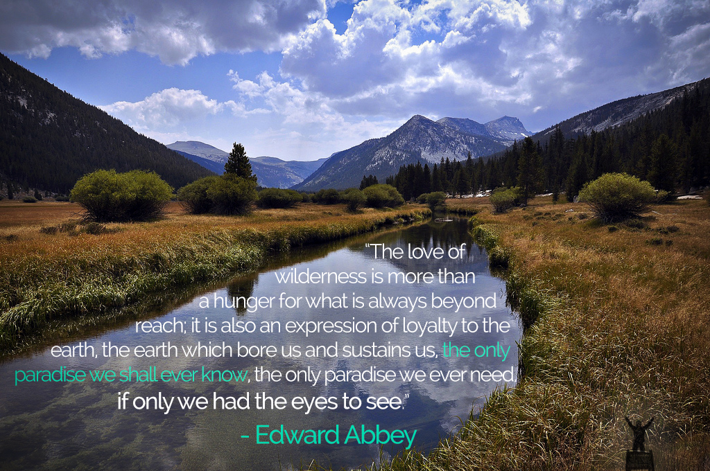 edward abbey quote