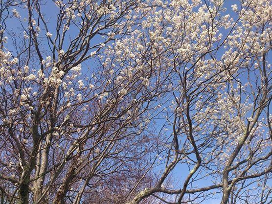 flowers ridge