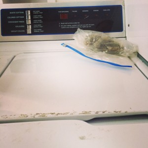 Laundry room weed