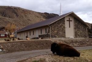 Ughhh bison get outta mah faaaace
