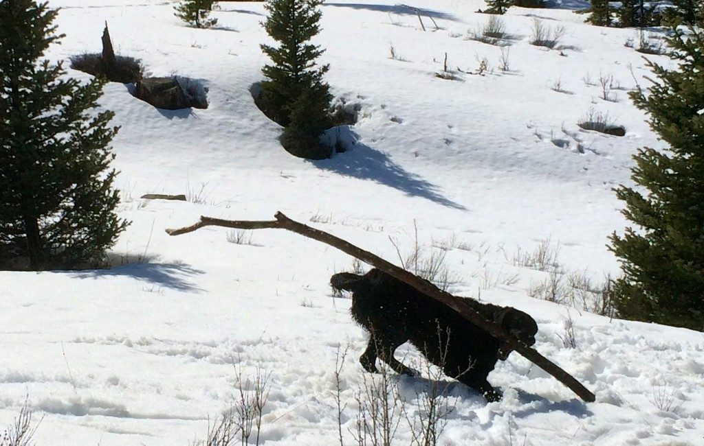 Oh sweet I found a bigger stick. Guys! Look at my stick!