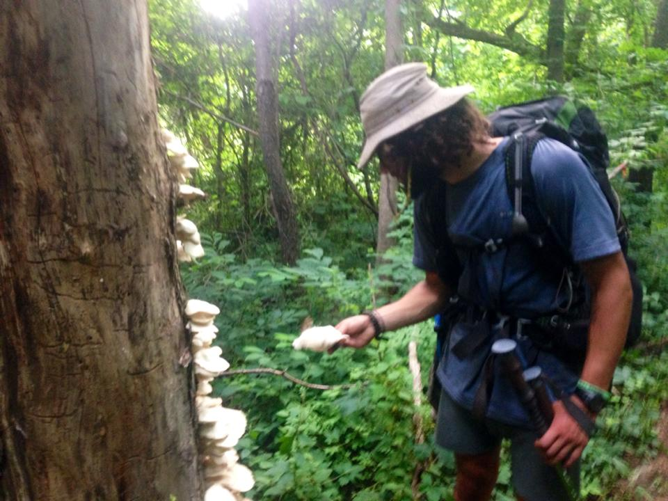 20 edible plants and fungi on the appalachian trail