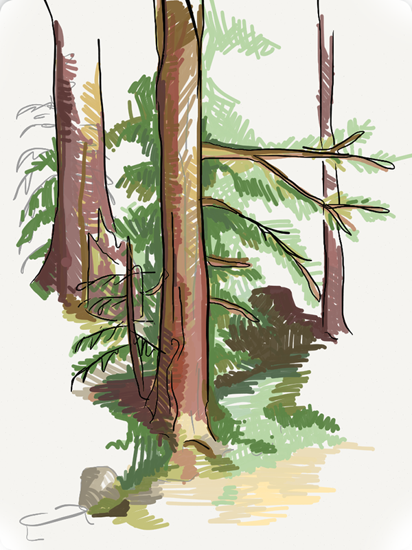 I visited a friend in California and spent some time drawing in the woods.