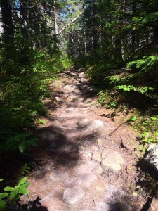 """The flat section of the trail where a SOBO told us there were """"literally no roots or rocks on that part of the trail at all.  It's an old railroad bed or something.""""  Lies."""