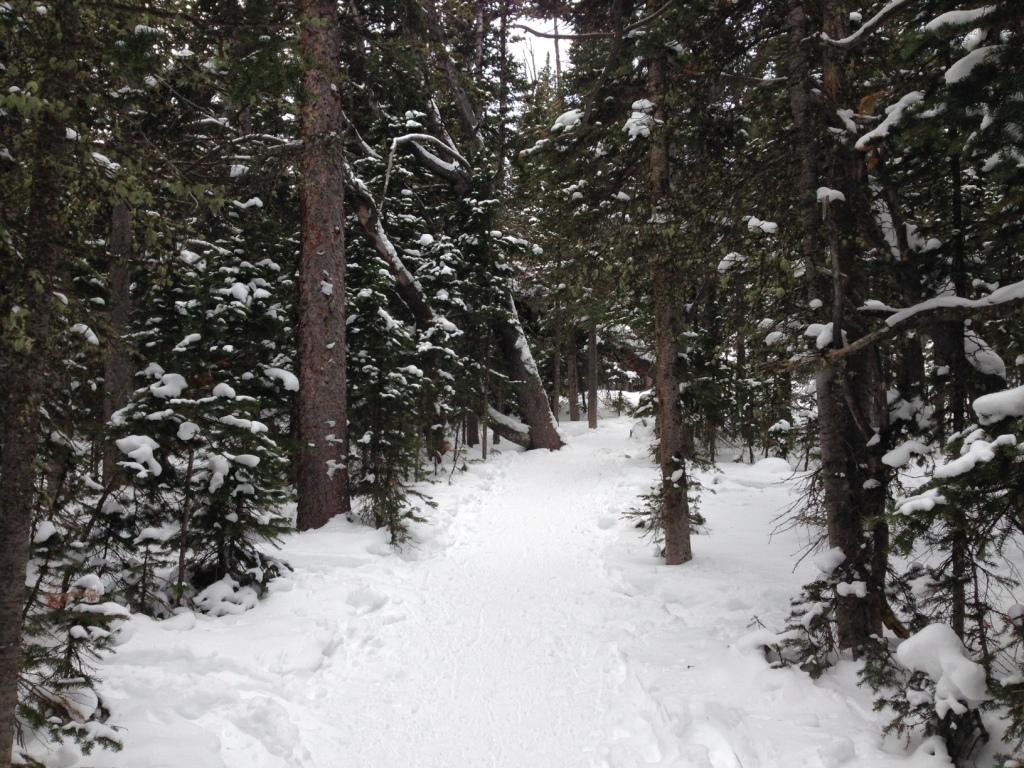 forest snowshoe brainard lake
