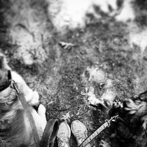 My favorite hiking companions!