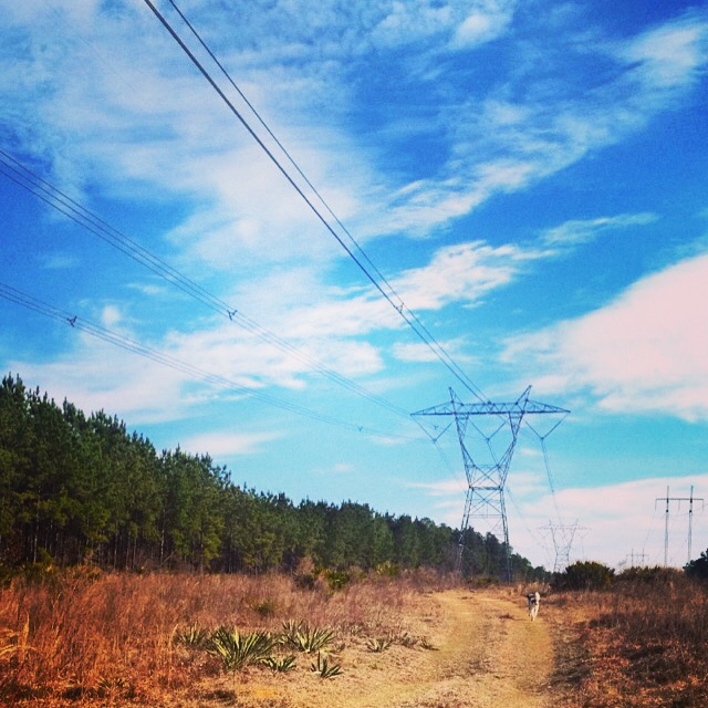 "This is one of the ""trails"" I hit this week. Powerlines and palmettos dot the landscape and plenty of Gopher Tortoise/Timber Rattler holes provide ample opportunity for ankle breaking."