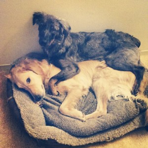 Little Bear & Griffin practicing sleeping in small spaces...