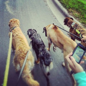 Leashes on all the beasts