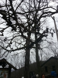 All the shoes in the tree at Neel's Gap.