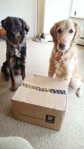 Dogs love getting packages too!