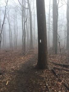 Blaze Among the Fog