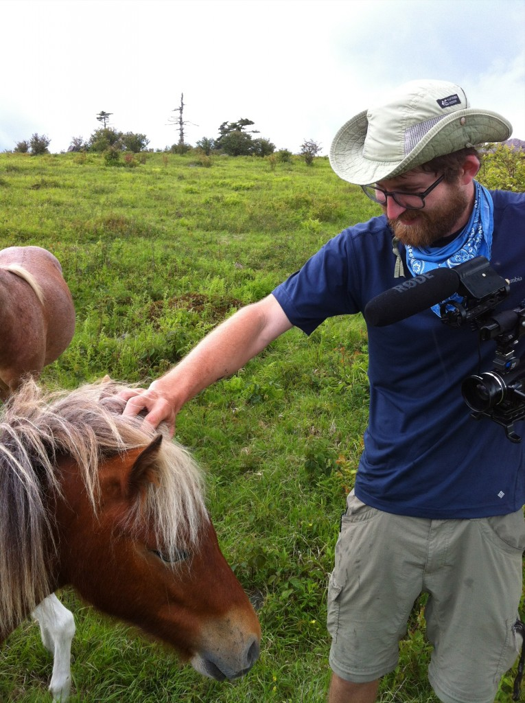 Grayson Highland Ponies