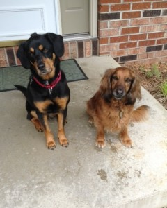Corky and Brandy, the dogs we are leaving behind.