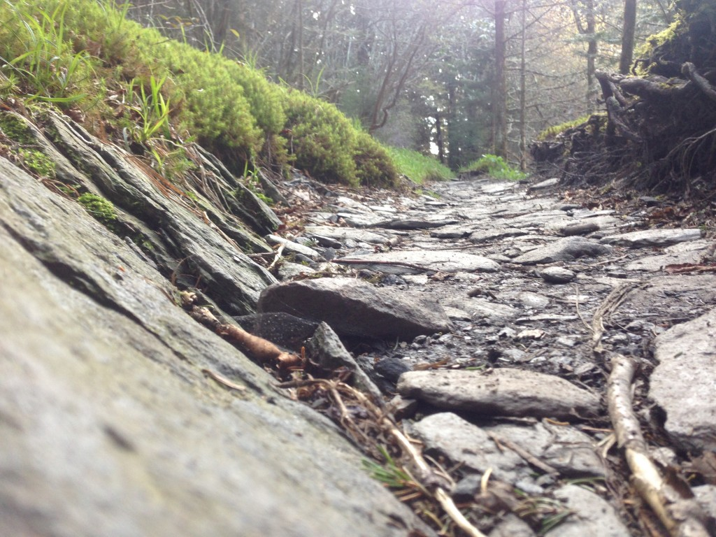 Here's what most of the trail through the Smokies looked like to my feet.