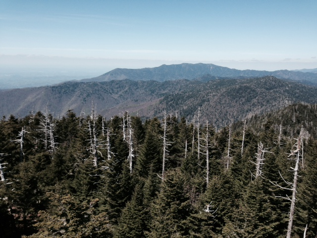 The view from Shuckstack Fire Tower