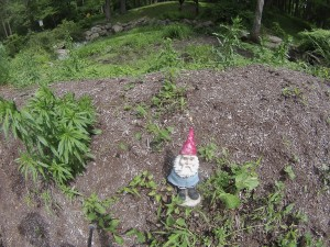 Gnome Sayin'? I'm taking a gnome census.