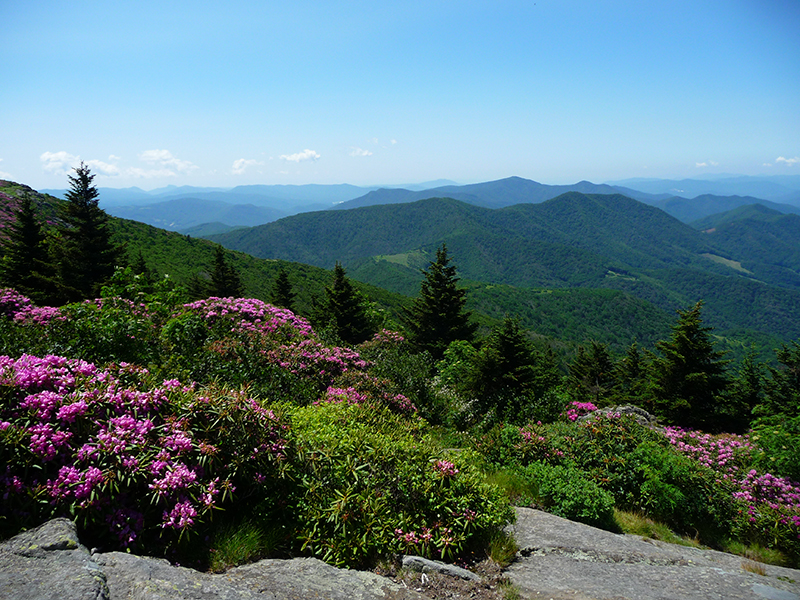 Views from Grassy Ridge Bald. Photo credit Brenda Wiley. CC BY-NC-ND 2.0.