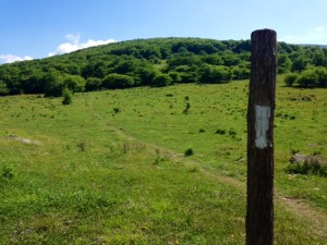 The Grayson Highlands
