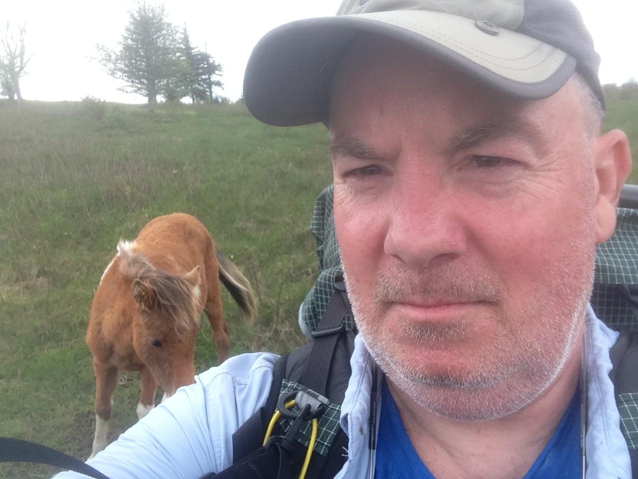 ponies appalachiani trail