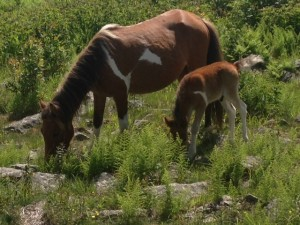 Foal and momma