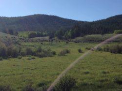 cows colorado trail