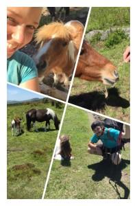 The ponies!
