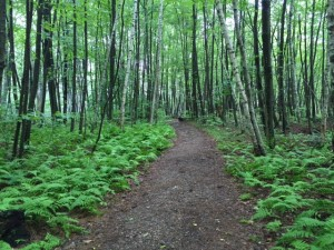 The green tunnel of the Appalachian Trail
