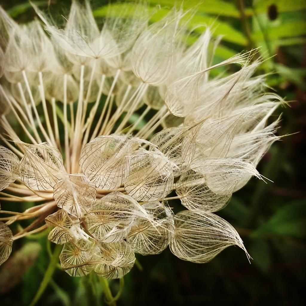 Flower fuzz