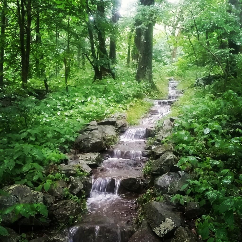 The trail running up North Marshall Mountain, VA