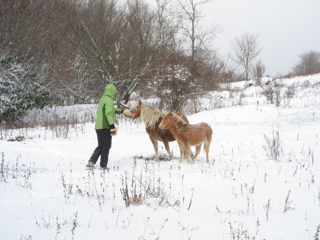 Despite the blizzard, the ponies were out in droves!