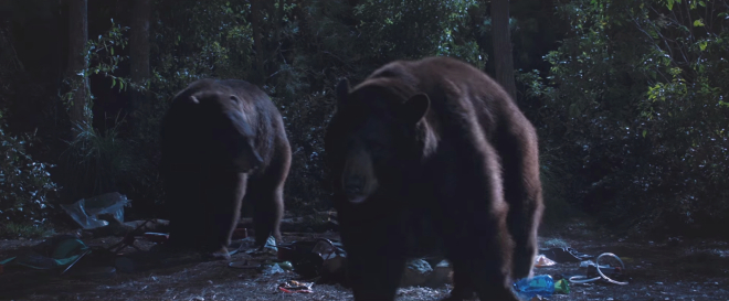 While there are plenty of black bears along the entire length of the Appalachian Trail, your chances of running across a grizzly are nonexistent. Image courtesy of Route One Films and Wildwood Enterprises.