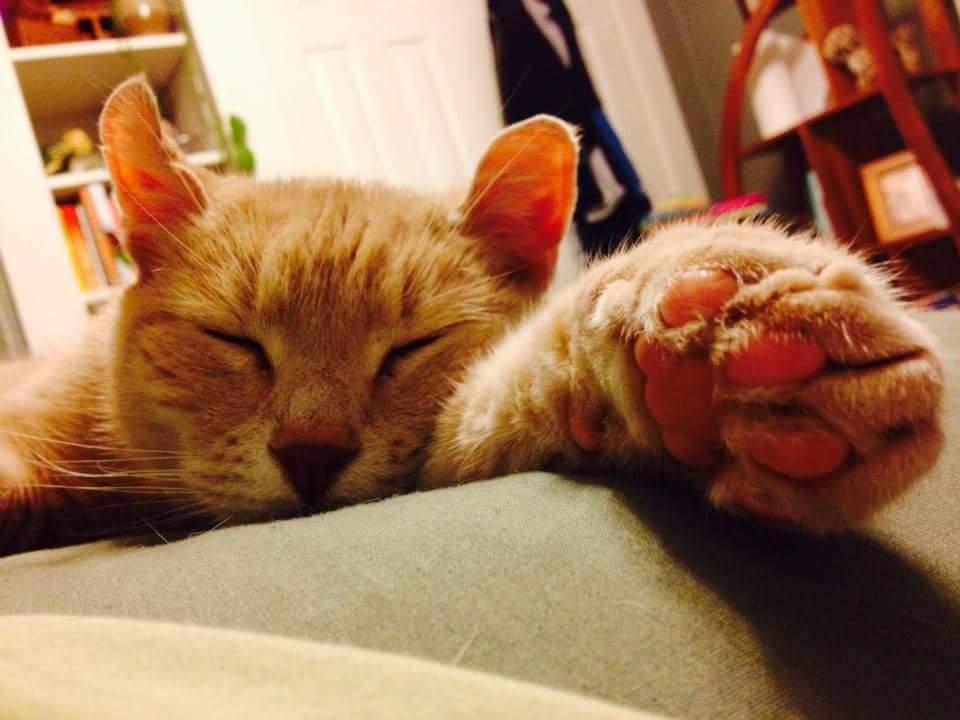 Skiddy Kitty, one of my many loves.