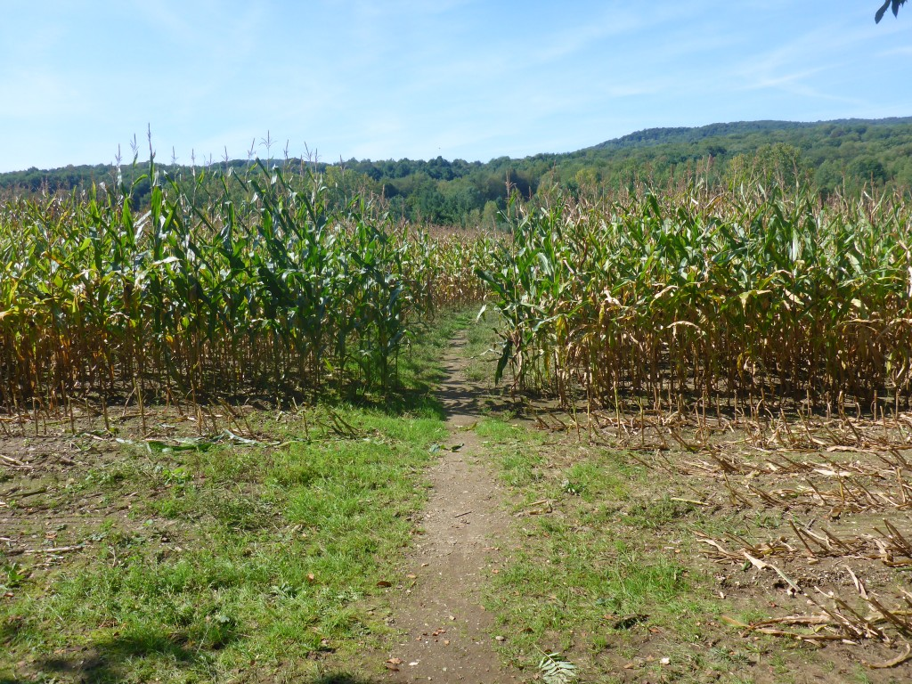 Sorry, farmer of corn. We need to walk through here.