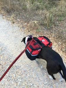 Hiking Trails at Ink Lake