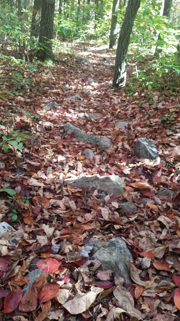 The rocks are hidden beneath a blanket of leaves!