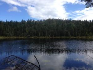 Gentian Pond