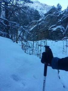 black diamond carbon cork trekking poles