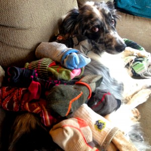 Jake unwillingly modeling our pile of Darn Toughs (not pictured: multiple pairs hiding somewhere in our gear box)