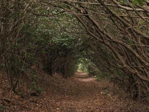 green tunnel appalachian trail
