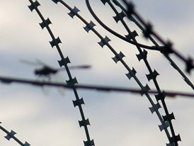 Dragonfly and Razor Wire in Afghanistan