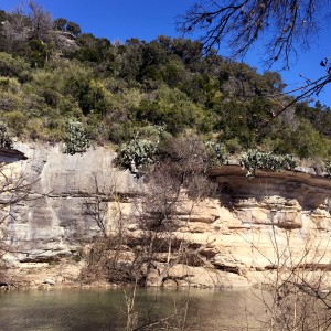 Cliffside cacti on the Barton Creek Greenbelt