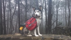 Panda would also make a lovely dog gear model. This is the Ruffwear Palisades pack.