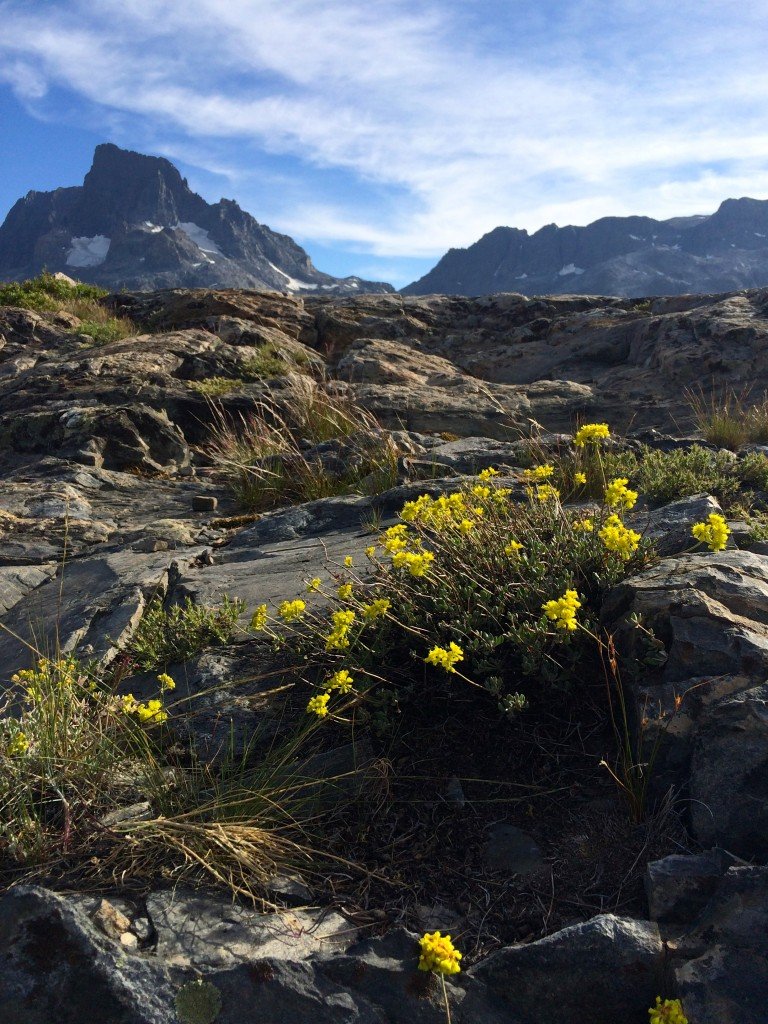 Wildflowers & Banner Peak