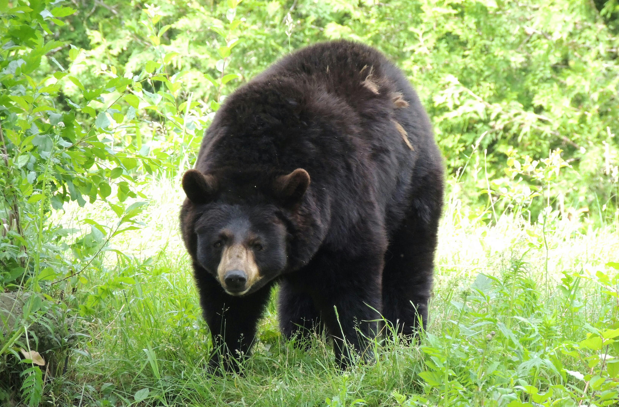 5 Ways to Avoid Being Eaten by Bears - The Trek
