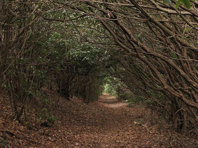 thru-hiker advice