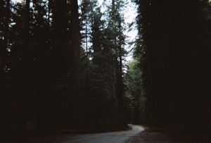 Driving through Redwoods in California.