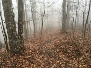 I set out on cold, foggy morning