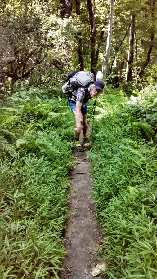 Stilt Grass lining the Appalachian Trail in NY